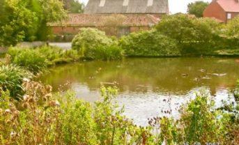 Ferrensby village pond