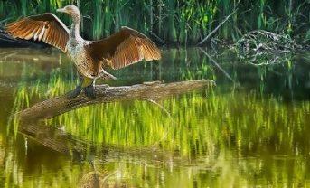 Ferrensby wildlife (photo by Tony Brown)